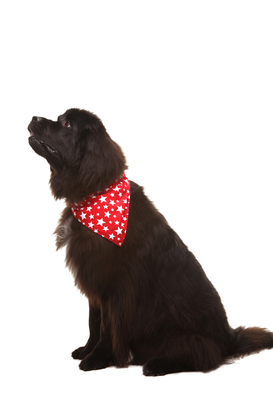 Reversible Dog Bandana by 4 PAWS Style | Pretty Fluffy