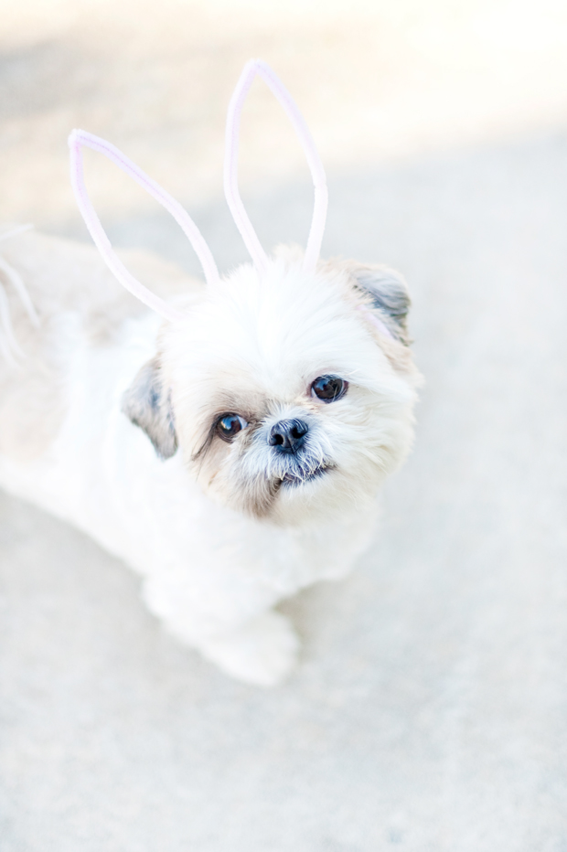 DIY-Coco-Easter-Bunny-Ears