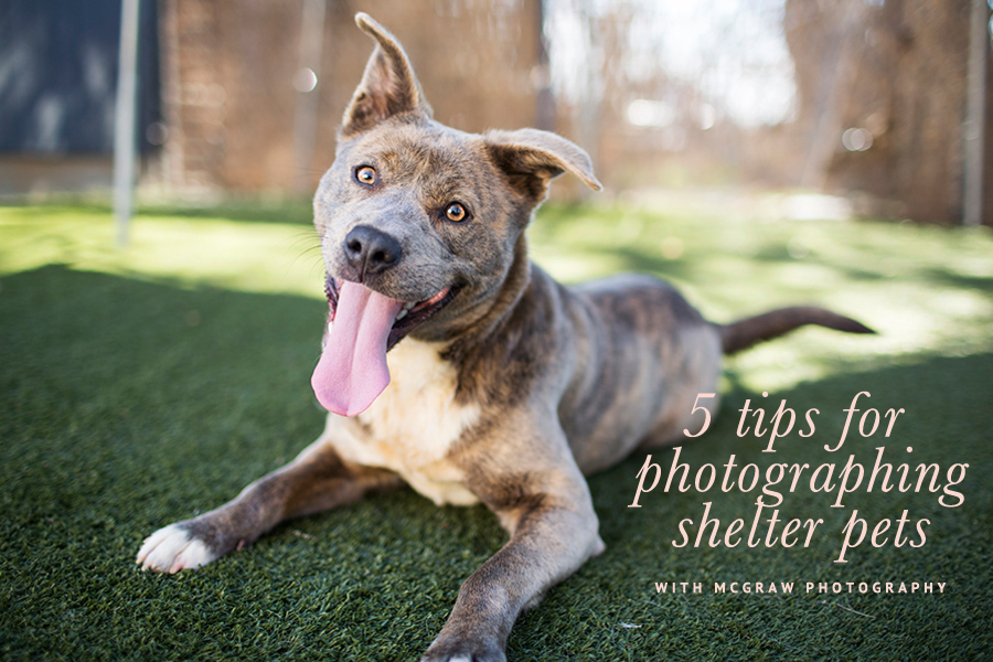 5 Tips for Photographing Shelter Pets