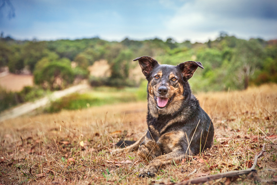 Australian Rescue Dogs by Ragamuffin Pet Photography | Melbourne Pet Photography | Pretty Fluffy