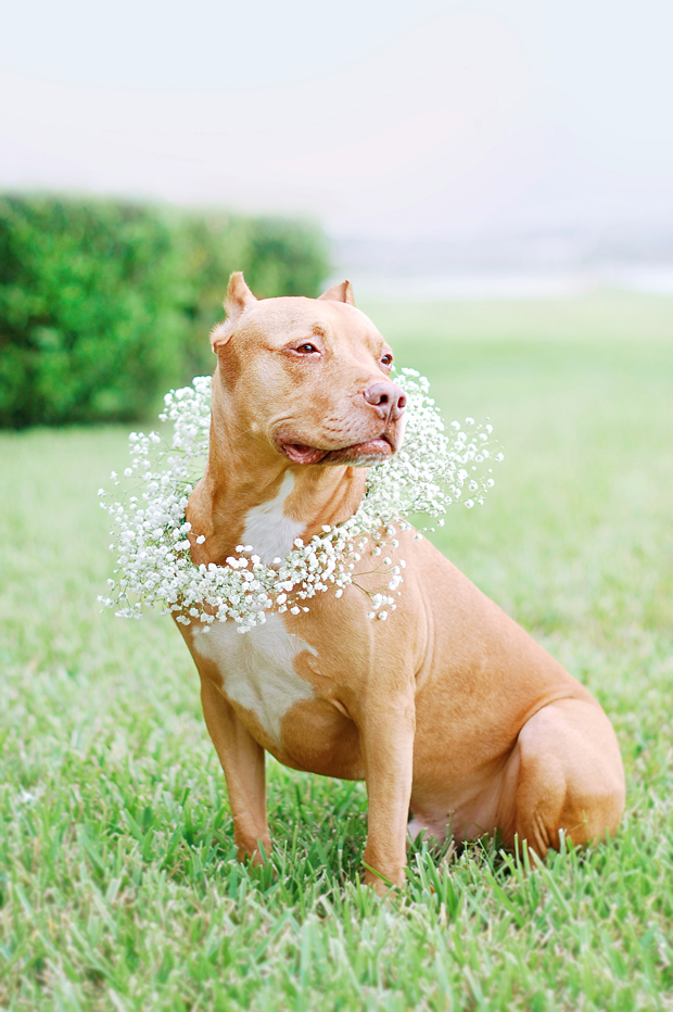 Dog-Floral-Wedding-Wreath-Lex