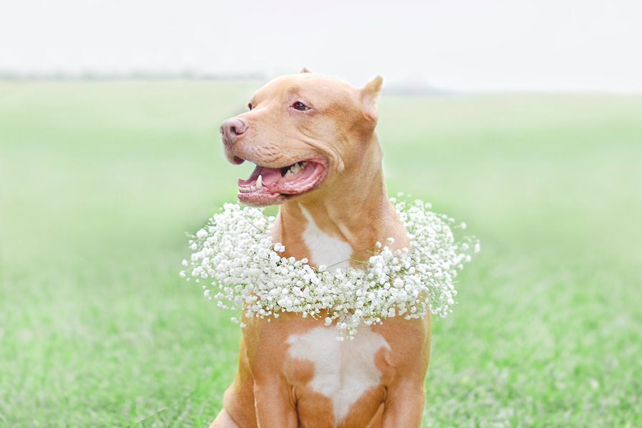 DIY: Floral Dog Wedding Wreath