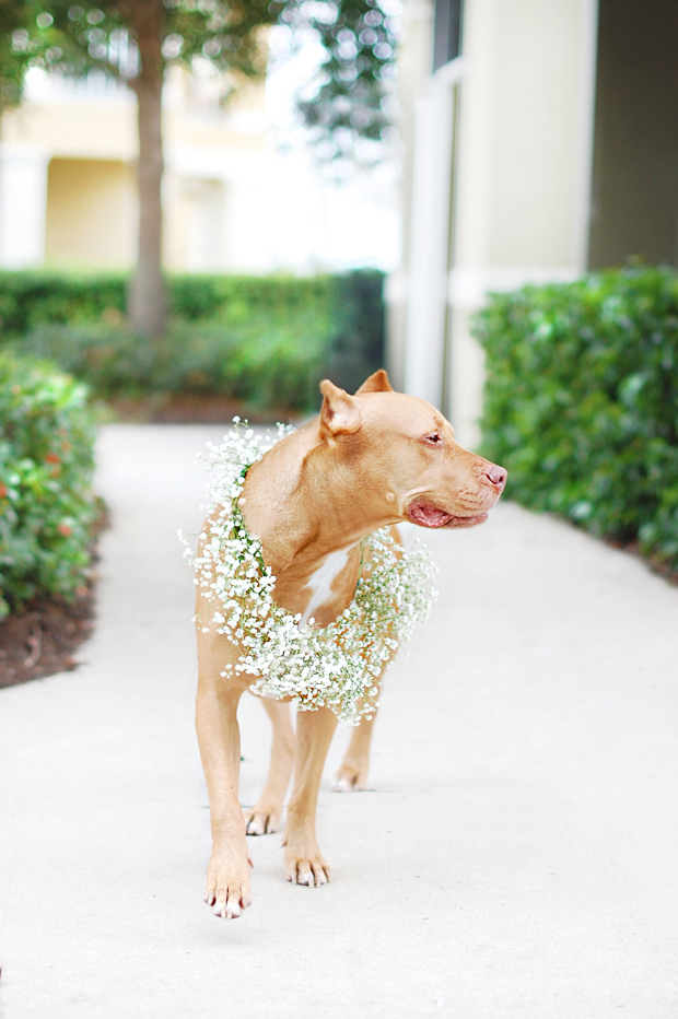 Floral_Dog-Wreath-DIY