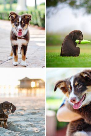 Puppy Essentials Checklist | Pretty Fluffy