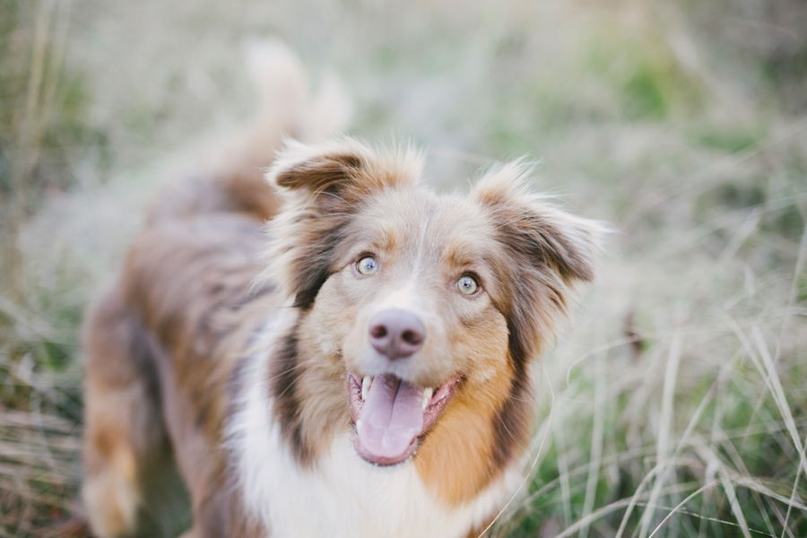 Merlin's Story by Willow & Co. | Angel Session Pet Photography | Pretty Fluffy