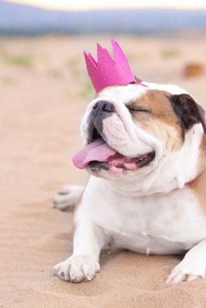 DIY Dog Birthday Crown | Pretty Fluffy