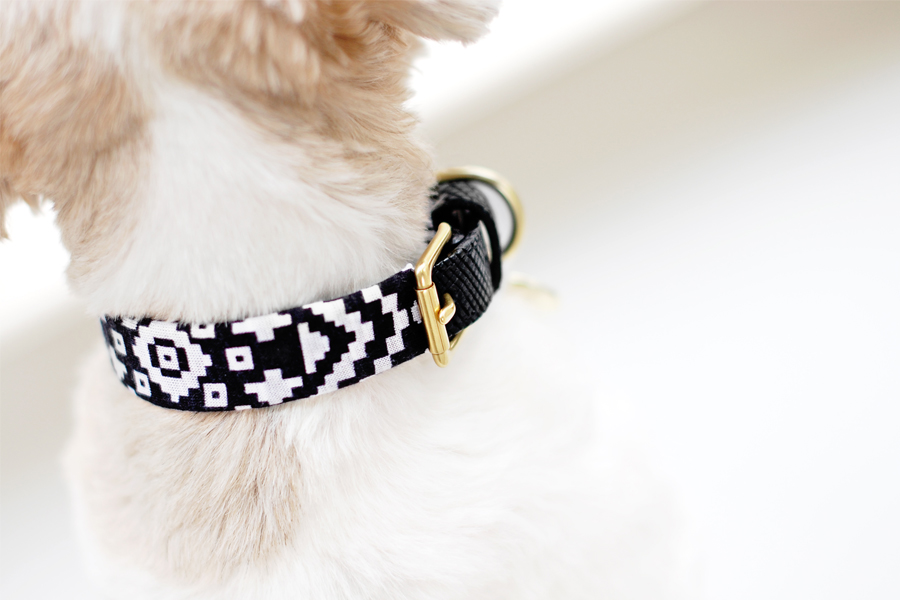 Diy Dog Life Collar