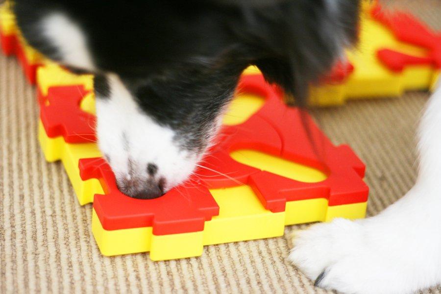Nina Ottosson Dog Toys Review   Pretty Fluffy