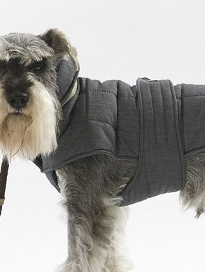 Top 6 Winter Coats for Dogs | Pretty Fluffy