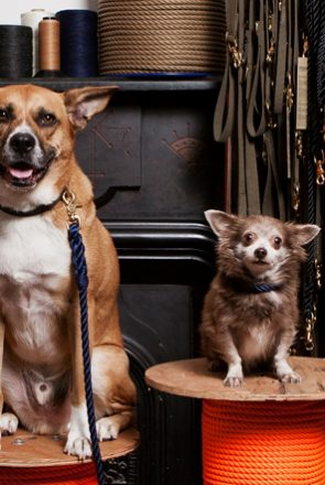 6 of the BEST Rope Dog Collars and Leashes