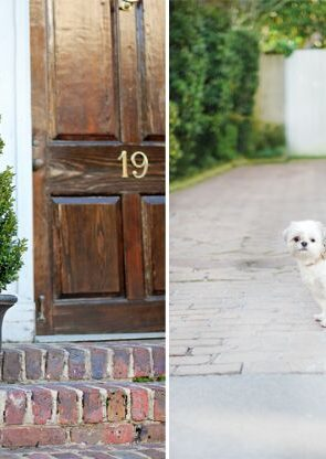 Tips for moving with dogs   Pretty Fluffy