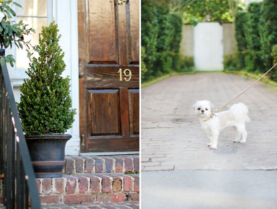 Tips for moving with dogs | Pretty Fluffy