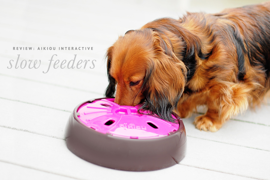 catch use cat and green feeder in dog slow