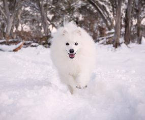 5 Pro Tips for the BEST Winter Dog Photos | Pretty Fluffy