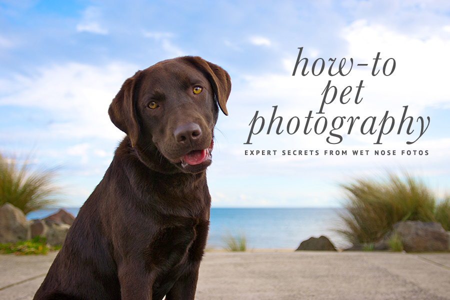 Pet Photography Ebook by Wet Nose Fotos