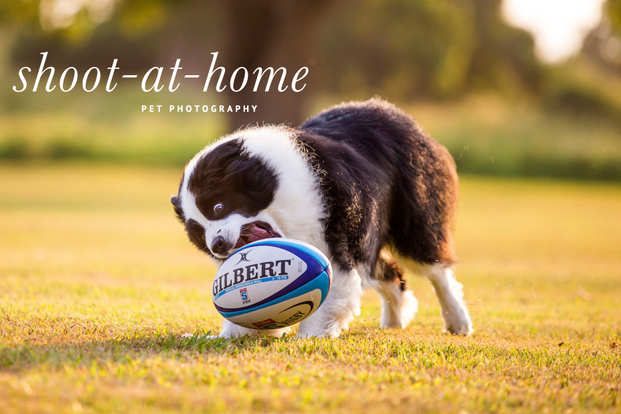 5 Dog Photography Ideas You Can Shoot At Home