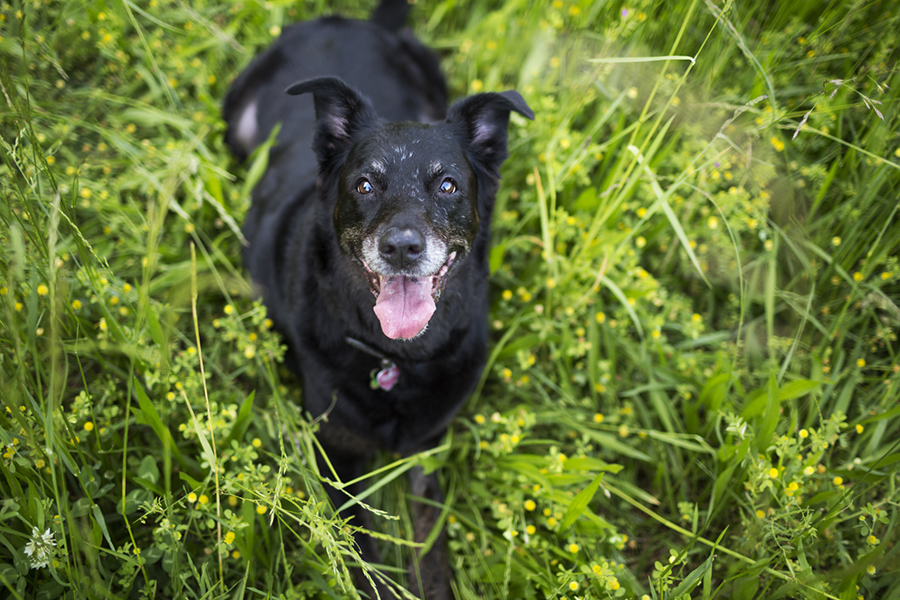 What is an Angel Session? (and why your senior dog needs one)