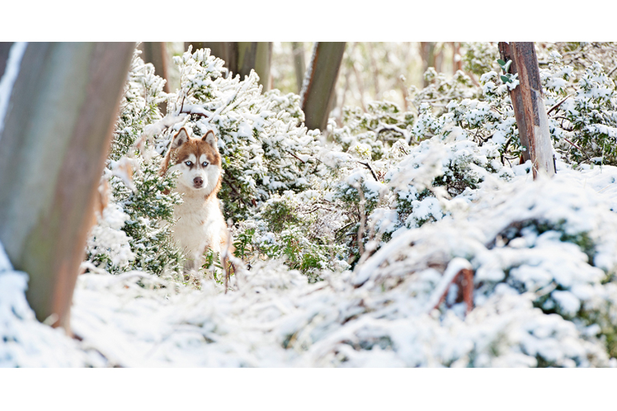 Snow Dogs by Kirstie M Photography | Pretty Fluffy