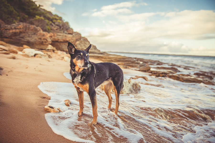 5 Pro Tips for Senior Pet Photography