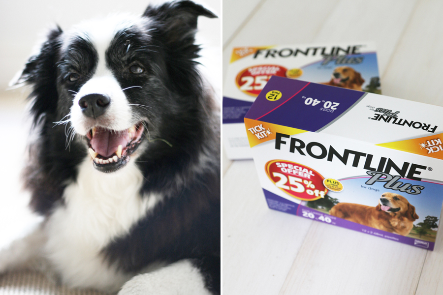 Frontline Plus Giveaway - Win 1 of 5 Prize Packs | www.prettyfluffy.com