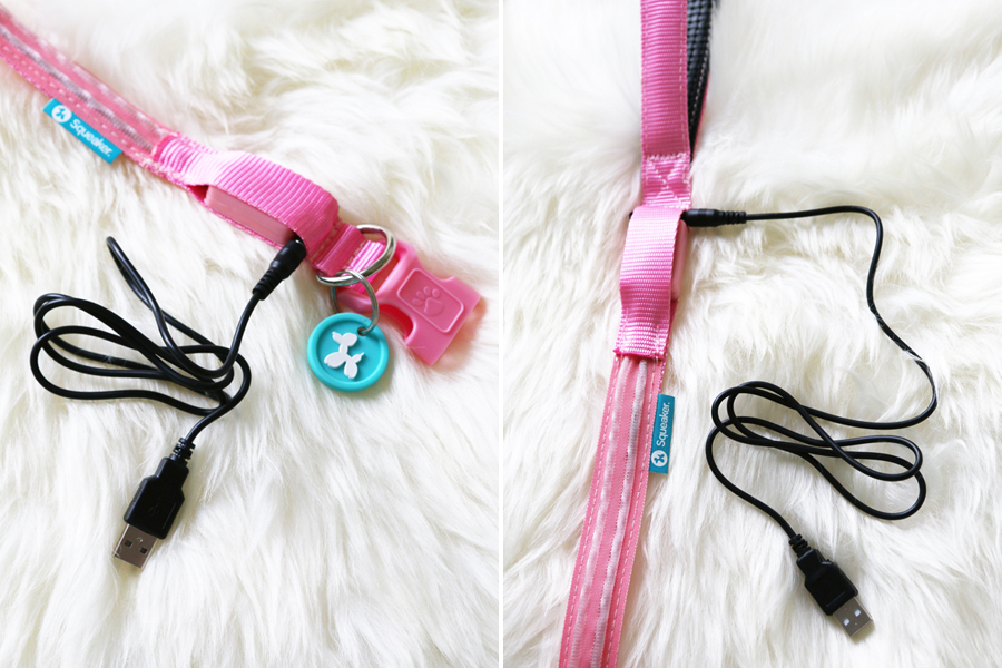 Squeaker Dog Collars & Leads Review - After testing the Squeaker dog collars and leads with illuminating LED light, I discovered they are one of the BEST ways to keep your dog safe when out and about. | www.prettyfluffy.com