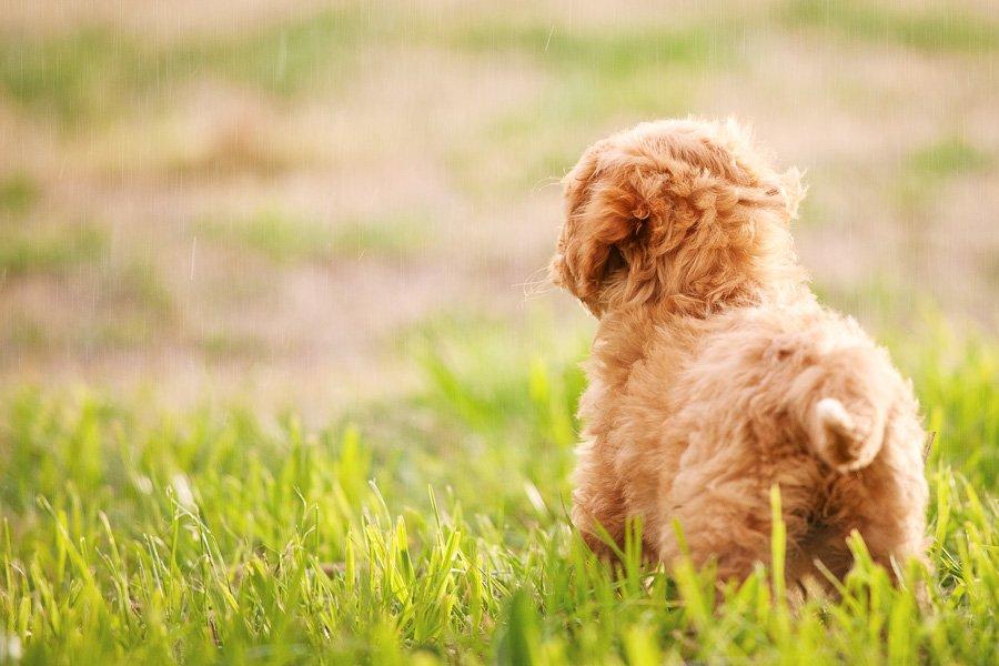 5 Ideas for Spring Pet Photos   www.prettyfluffy.com
