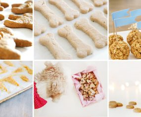 15 Homemade Healthy Dog Treat Recipes Your Dog Will Love