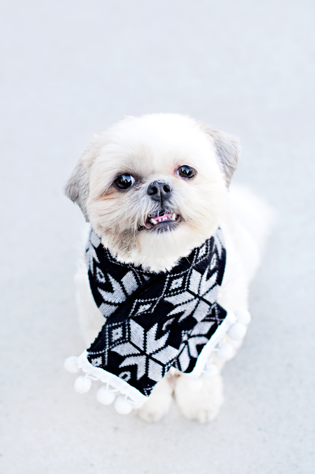 No-Sew-Doggy-Scarf-DIY