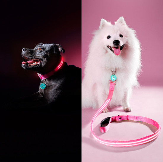 Squeaker Poochlight Dog Collars and Leads   www.prettyfluffy.com