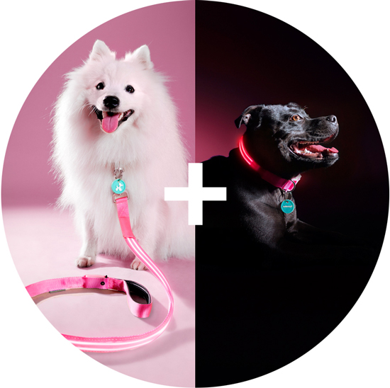 Squeaker Poochlight Dog Collars and Leads | www.prettyfluffy.com