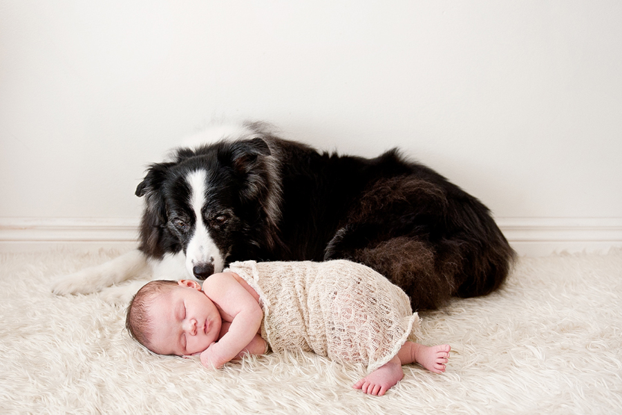 Top tips for including your pet in your newborn photography session everything you need to