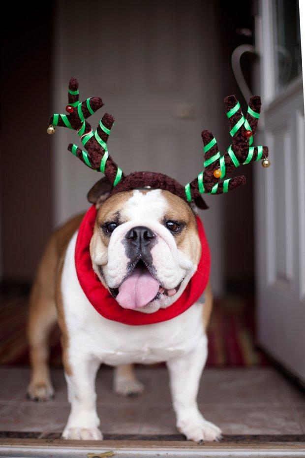 Missy-Reindeer-2