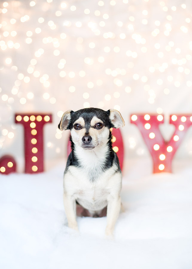 christmas-dog-photos-holiday-gift-for-dog-owners