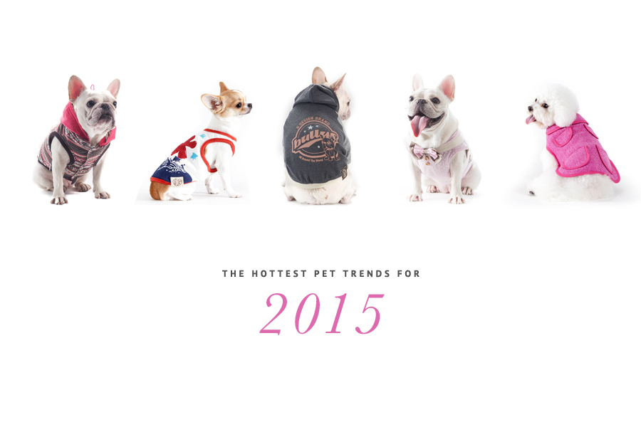 The Hottest Pet Trends for 2015