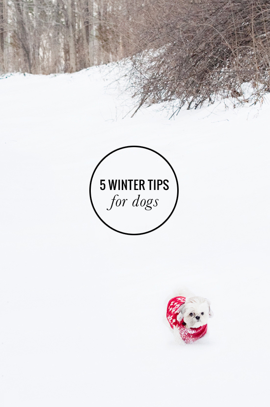 5-winter-tips
