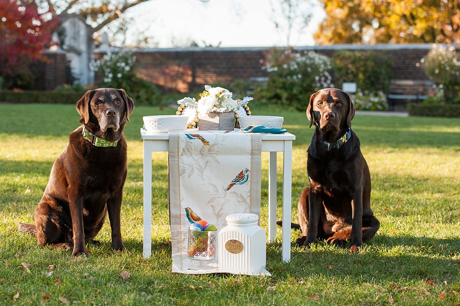 Dog Birthday Party by Jenny Karlsson Photography - fun and stylish ideas for your pet birthday party | Pretty Fluffy