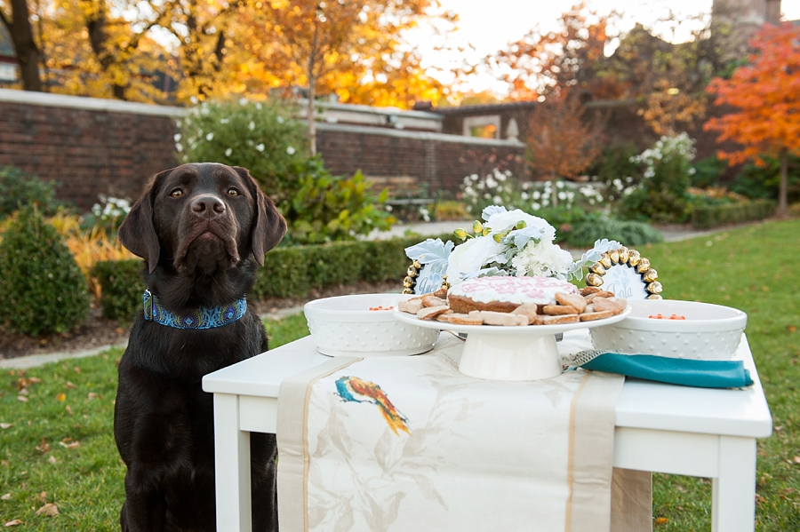 Dog Birthday Party by Jenny Karlsson Photography - fun and stylish ideas for your pet birthday party   Pretty Fluffy