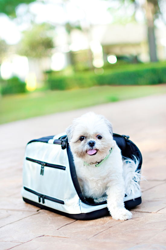 Pet Travel Carrier | Pretty Fluffy