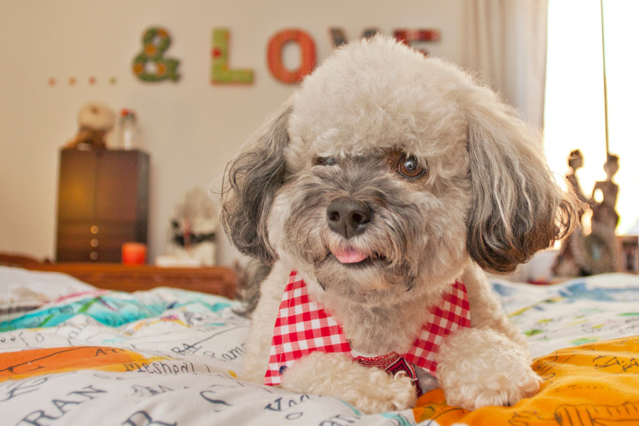 Rescues turned Pampered Hollywood Dogs! Heart warming story by Fetchlight Pet Lifestyle Photography