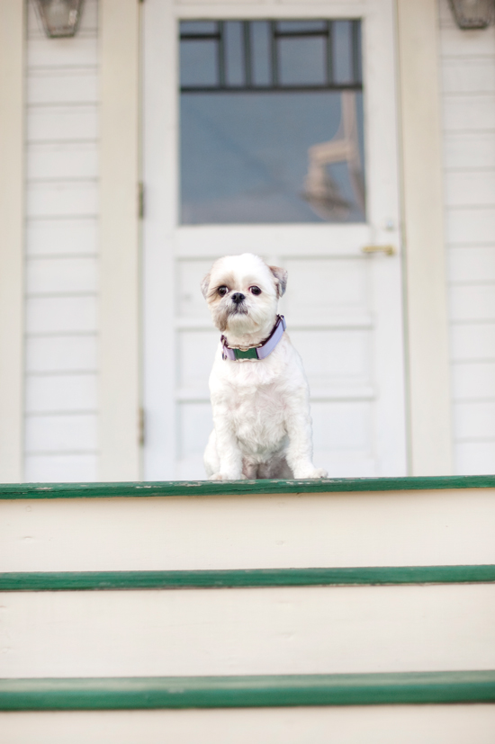 Keeping-Your-Dog-Cool-this-summer