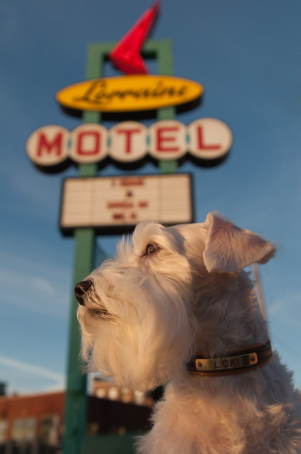 The Year of the Dog: 52 Weeks of Memphis by Kathryn Willis Photography