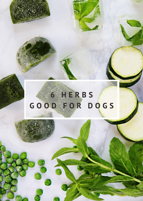 6 Herbs Good for Dogs