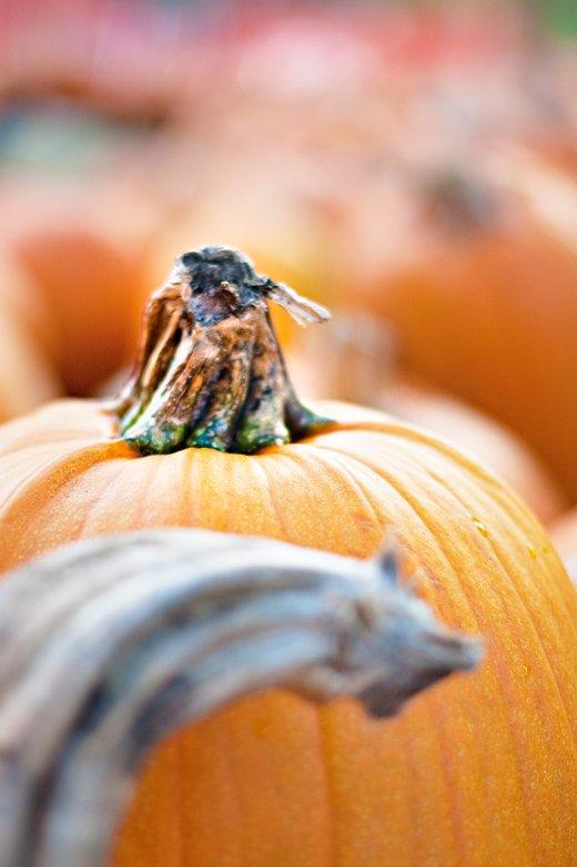 pretty-fluffy-halloween