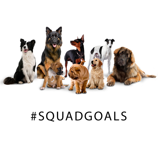 How to Choose Your Ultimate Dog Squad #squadgoals