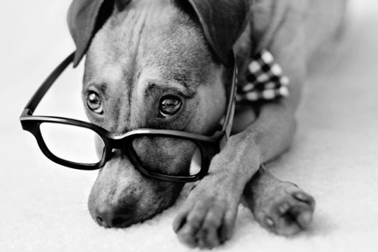 FUN QUIZ: How Smart is Your Dog? Find out your dog's Doggie IQ!