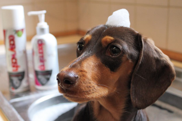 Our Best Winter Dog Grooming Tips