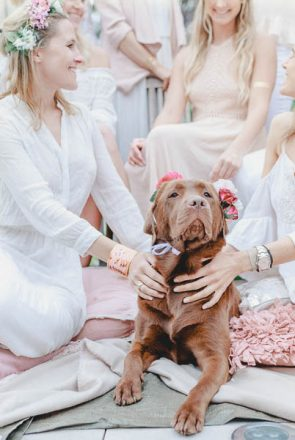 Dog Friendly Wedding Inspiration! Styling tips and inspiration from wedding experts on how to have a stunning dog friendly wedding. Includes how to DIY your very own dog flower crown.