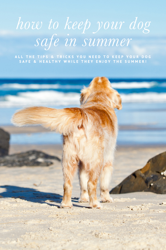 Expert Tips to keep your dog happy and healthy during summer. Including dog summer safety tips to keep them cool, DIY frozen treats and medical advice.
