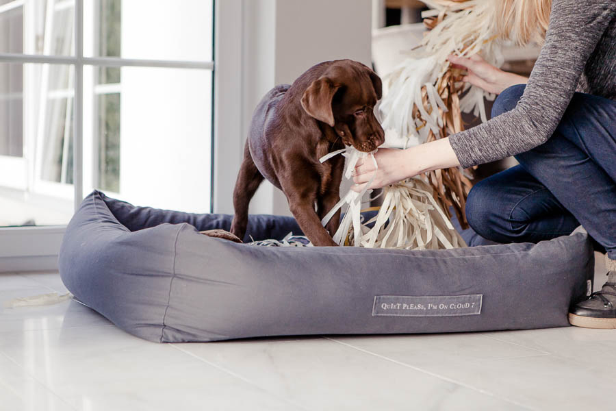 The cutest way to welcome a new puppy home - including homemade dog treat recipes, choosing a puppy bed and capturing your new puppy in precious photos.
