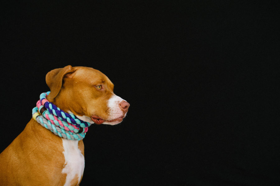All Lasso dog collars and rope leashes are handcrafted in Puerto Rico as a one-of-a-kind piece making each one a perfect fit, style and colour for your dog.